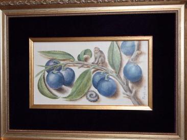 Prunus domestica – Domaća šljiva (akvarel na gipsanoj i MDF podlozi,11.5x20cm) 2016.god.